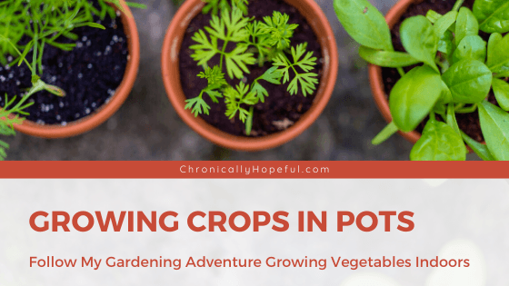 3 pots with seedling vegetables growing in them. Title reads Growing crops in pots, follow my gardening adventure growing vegetables indoors